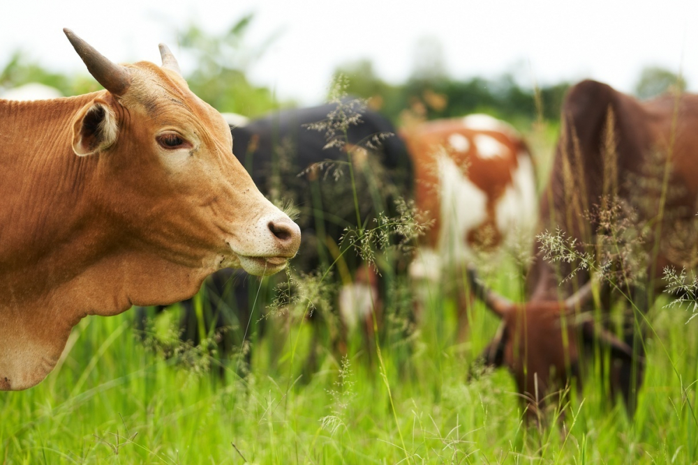 Почти 103 млн рублей от края получат четыре кубанских сельхозкооператива