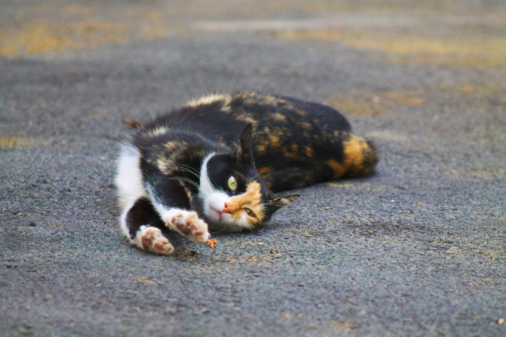 Зверье мое: Краснодар вошел в тройку городов-любителей кошек