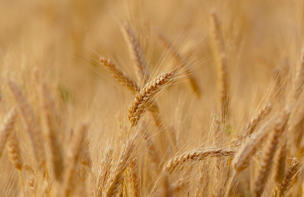 Аграриям Кубани хотят разрешить заправлять сельхозмашины прямо в поле