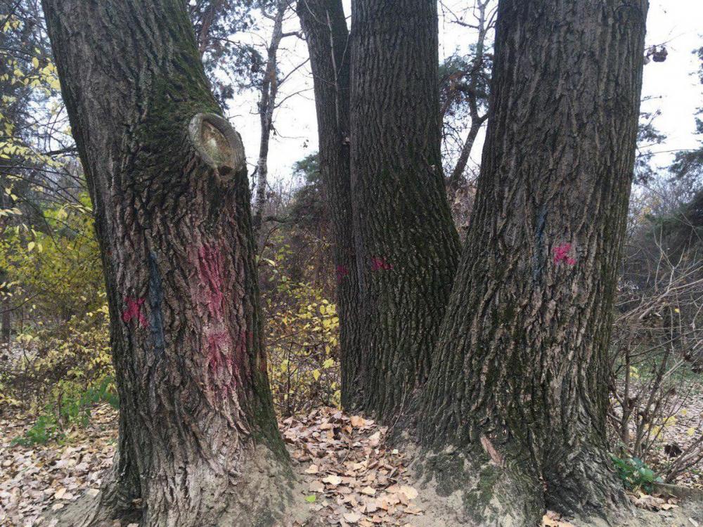 Старые срубят, новые посадят: на «Тропе здоровья» обновят лесополосу