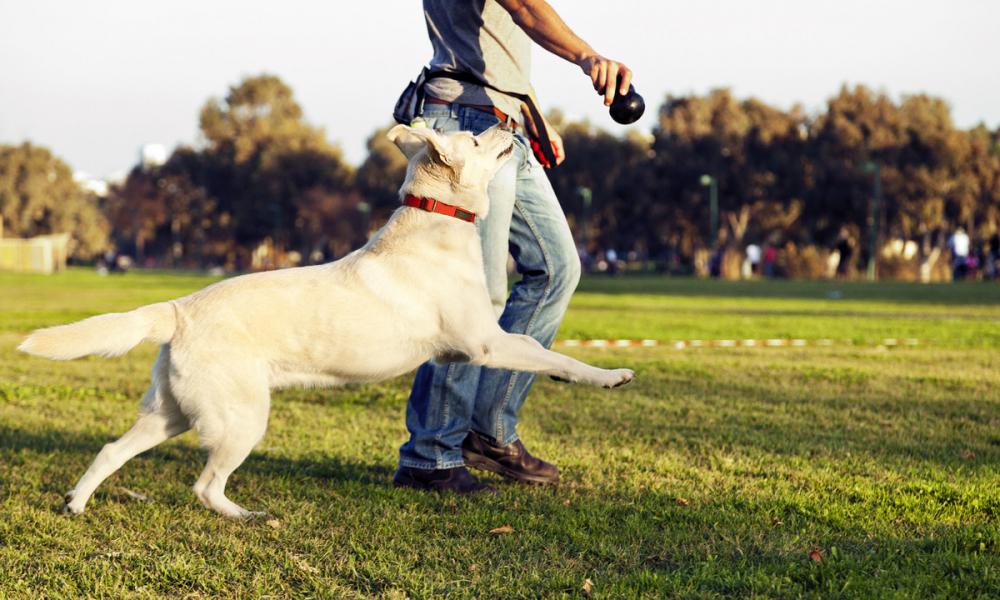 «Хозяева должны сами эту проблему решать», - мэр Краснодара о собачьих экскрементах в парках