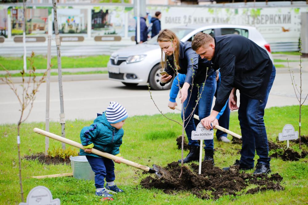 В «Губернском» и «Панораме» во время Всекубанского субботника высадили 100 фамильных деревьев