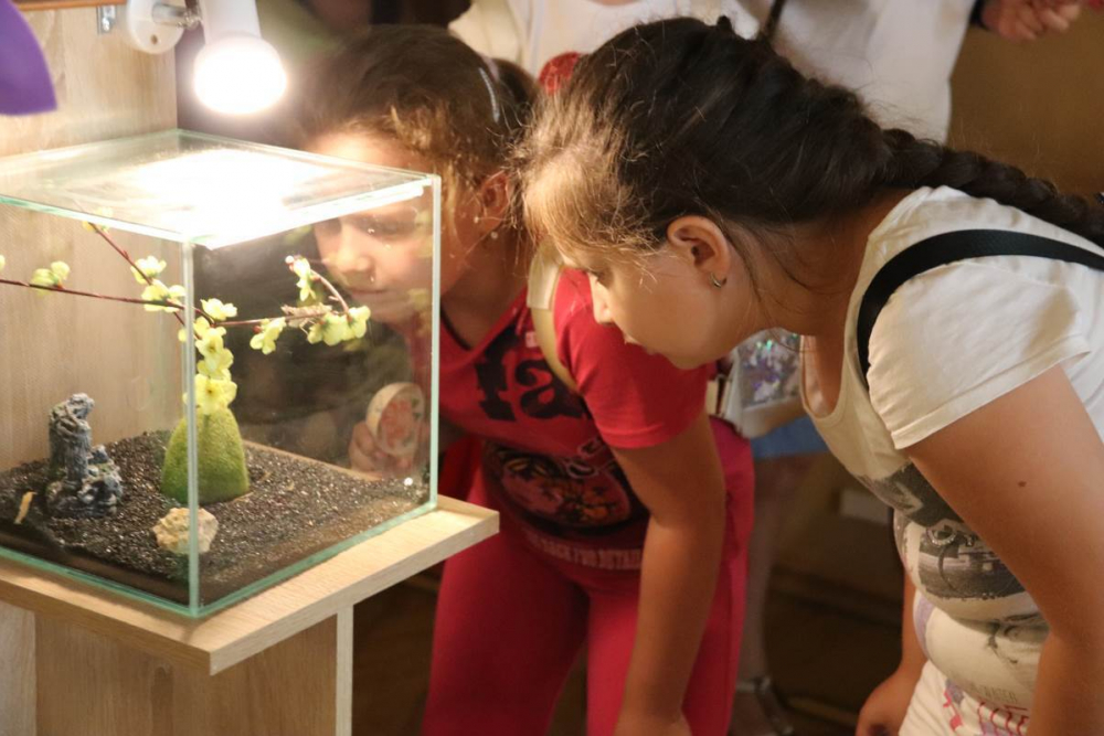 Зверье мое: уникальную выставку богомолов открыли в Краснодаре