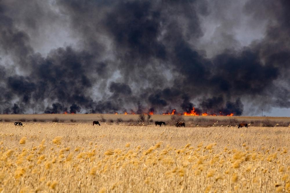 Борьба продолжается: семь действующих очагов лесных пожаров тушат на Кубани