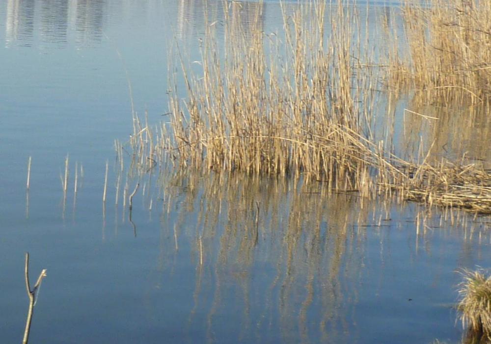 Стали известны подробности гибели трех человек в Краснодарском водохранилище