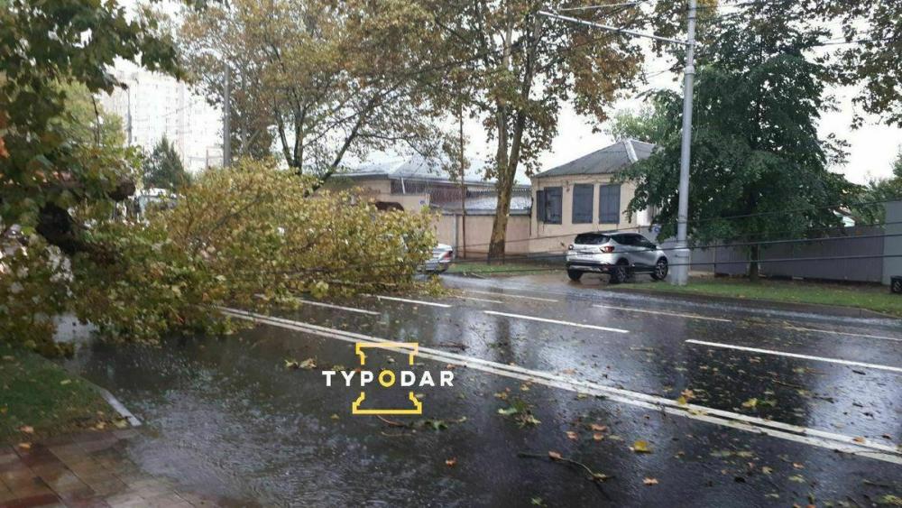 Из-за упавшего дерева в Краснодаре остановилось движение троллейбусов