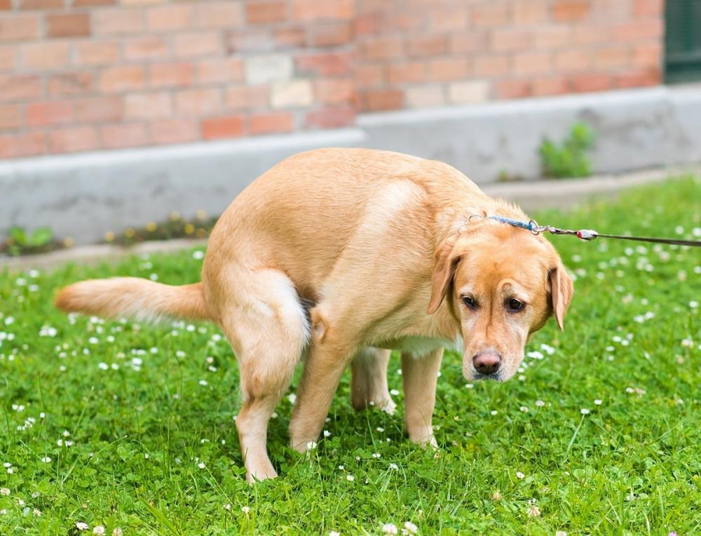 Собачьи экскременты стали поводом для рейдов в Сочи