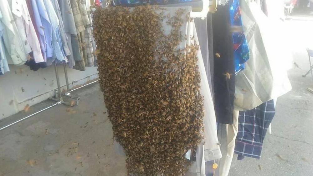 Пчелиный рой атаковал рынок в Краснодаре