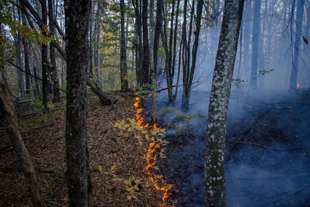 Семь лесных пожаров на Кубани потушили, осталось шесть