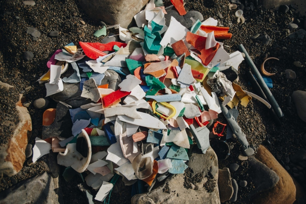 Greenpeace заявил о загрязнении побережья Черного и Азовского морей
