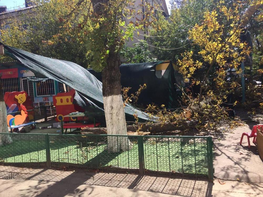 Заведующую краснодарским детсадом, в котором деревом убило ребенка, заподозрили в халатности