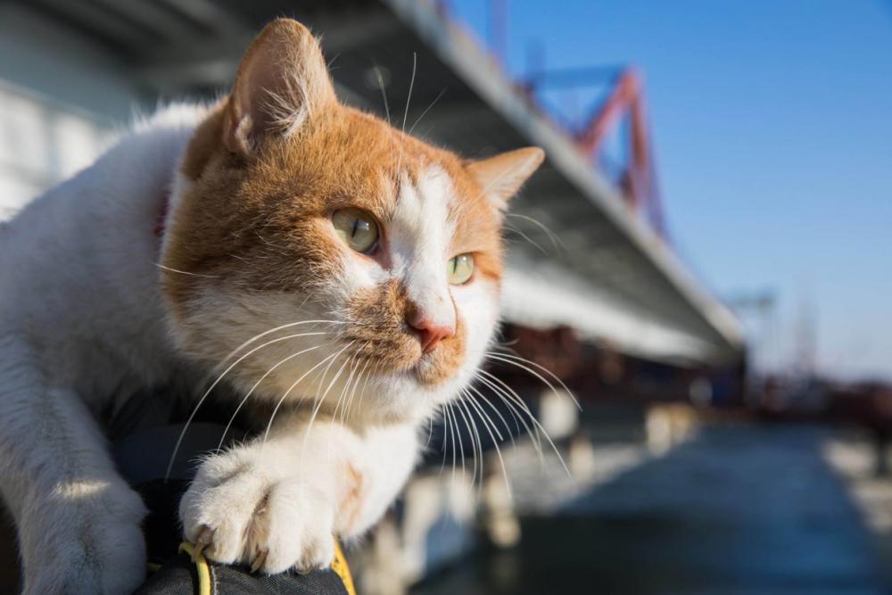 Прямая трансляция с открытия Крымского моста