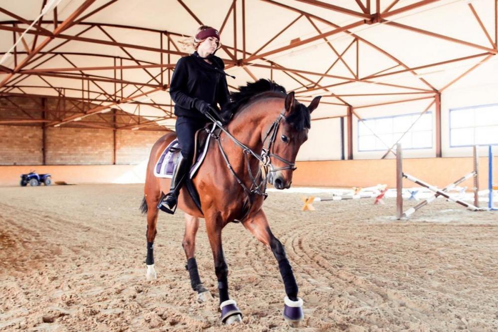 Кому и почему полезно кататься на лошадях в Краснодаре