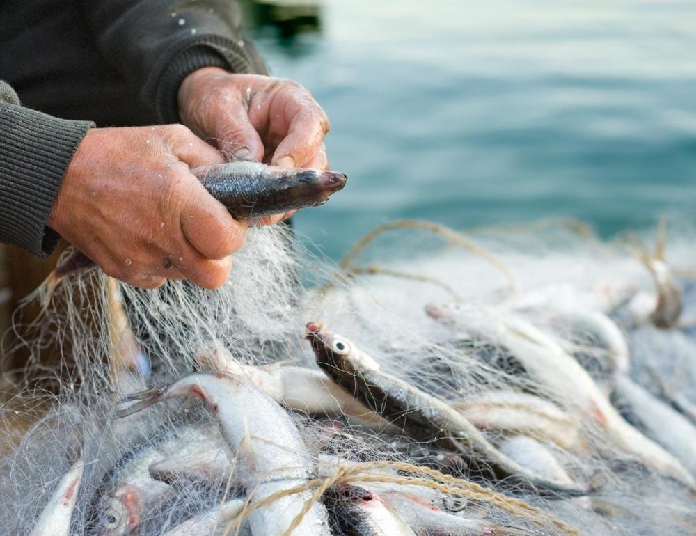 Сопротивление оказал браконьер, поймавший морских коньков близ Темрюка