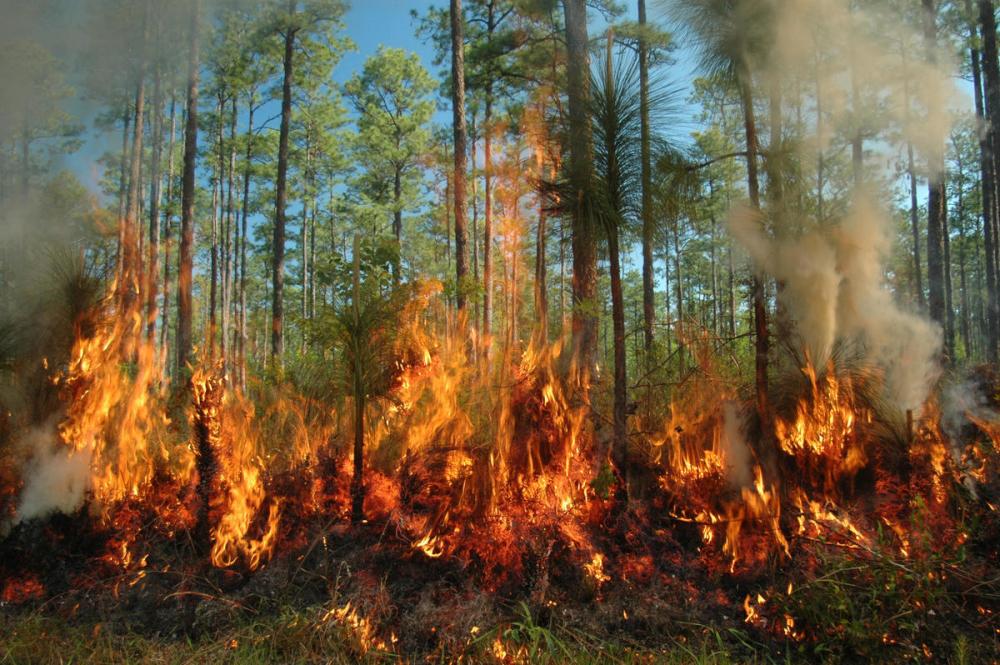 На Кубани объявили пожароопасность высочайшего уровня