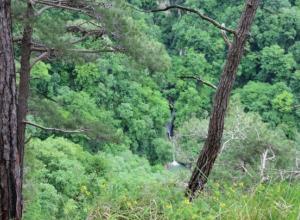 Сочинские спасатели отыскали в лесу заблудившуюся москвичку