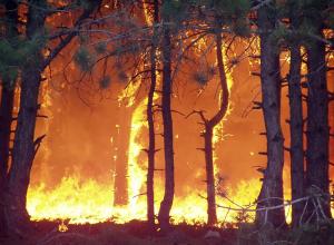 Пожароопасные выходные предрекают спасатели Кубани