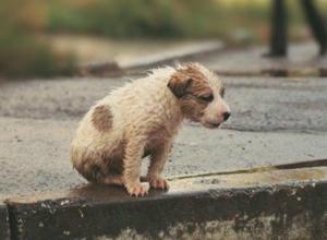 Власти Новороссийска вопреки законам разрешали убивать бездомных животных