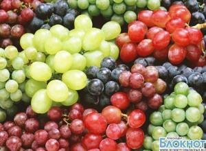 На Кубань не пустили свыше 20 тонн винограда