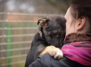 Ростовский живодер, растерзавший бездомных щенков, пойдет под суд в Геленджике