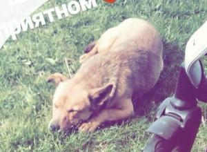 В станице Некрасовской Баба Манюня повесила чужую собаку за то, что она гоняла ее гусей