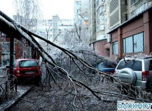 В Краснодаре упавшие деревья повредили свыше 65 автомобилей