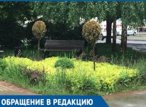 Вместо цветов — сорняки: Жители Краснодара пожаловались на плохое благоустройство