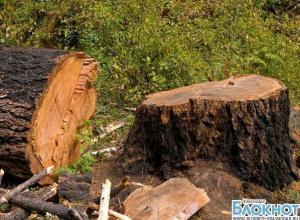 В Краснодарском крае на подростка упало дерево