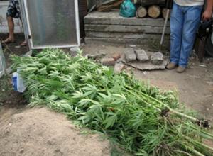 На Кубани пенсионер арестован за хранение наркотиков