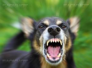 На Кубани расследуют дело о покусанном собакой мальчике