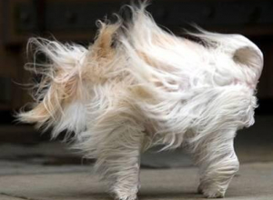 На Кубани действует экстренное предупреждение по ветру, но становится еще теплее