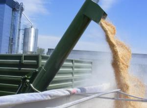 Доступ к терминалам Новороссийска потеряют большинство зарубежных зернотрейдеров