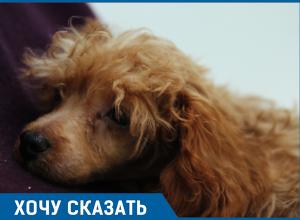 «Собаки - абсолютный источник счастья», - жительница Сочи