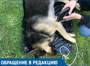 Хозяева убили собаку в самом центре Геленджика на глазах у сотен людей