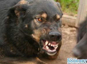 В Новороссийске пес загрыз девушку насмерть