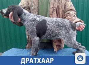 В Краснодаре продается «элитная» собака