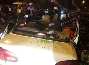 В Краснодаре и Сочи деревья раздавили автомобили