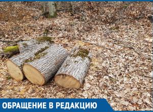 Браконьеры истребляют рощу с вековыми дубами под Краснодаром