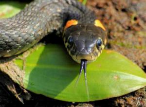 Эксперты Кубани расскажут все о «фантастических тварях»: почему краснодарцам стоит бояться змей?