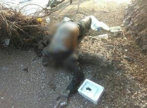 Шокирующие фото неизвестного трупа сделали на Кубани