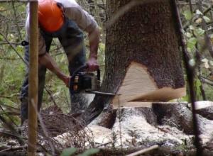 «Черные лесорубы» ограбили Кубань на 220 тысяч рублей