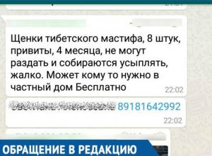 «За день позвонили больше тысячи раз», - Мошенники разместили фейковое объявление о раздаче дорогих щенков на Кубани