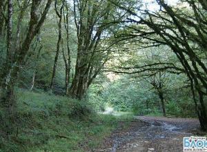 В Краснодарском крае в лесу обнаружили тело подростка