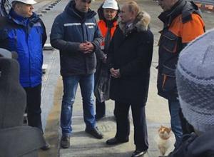 «Замурррчательный» кот Мостик похвастался фото с Путиным на Крымском мосту