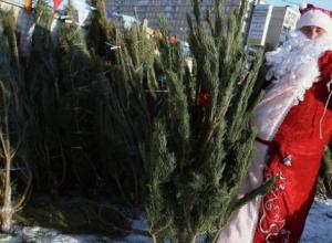 Стали известны адреса елочных базаров в Краснодаре и цены на деревья