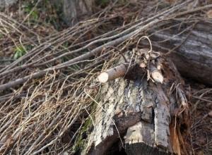 В Краснодаре ветер оборвал линии электропередач и повалил деревья
