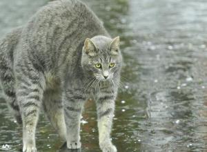 Дожди решили не покидать Краснодарский край