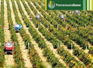 За 7 месяцев 2017 года Краснодарский филиал РСХБ выдал 20,7 млрд рублей инвестиционных кредитов