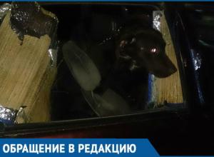 «Помогите ее освободить!»: заключенная собственным хозяином собака довела до слез краснодарцев