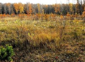 На Кубани 1,5 га земли отдали под сорняк